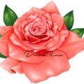 Davina Rose